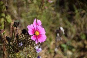 Wildflowers in the Ariege Pyrenees