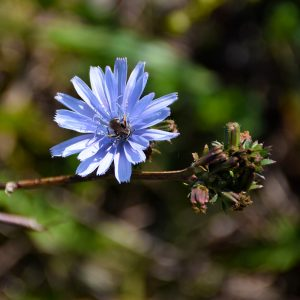 Ariege Wildflowers