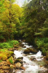 A Pyrenean stream
